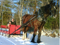 Beautiful day for a sunny sleigh ride.