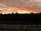The scenery on our 100 acre horse boarding farm is unmatched! Here, a beautiful sunrise awaits the fortunate early bird.