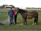 Geroge E. Merrill, Owner for over 40 years, with Grandaughter Colleen and her horse Nagi.