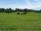 Horses have 50 acres of pasture turn out.